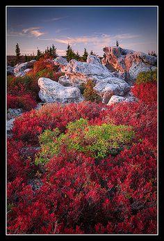autumn, Turtle Rock, Dolly Sods Wilderness, West Virginia.  Photo: Joseph Rossbach via Flickr