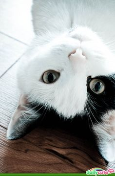 kitty cats, anim, kitten, funny cats, pet, white cats, black white, perspective, funny kitties