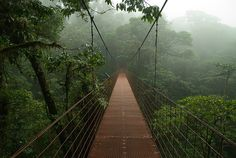 Hanging bridge in the canopy, Monteverde, Costa Rica
