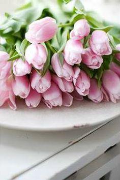 ♔ Tulips