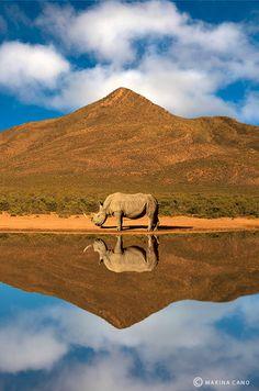 Rhino - Reflection - Wild   Marina Cano