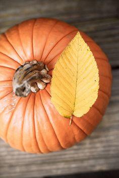 Pretty as a pumpkin