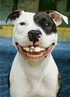 I love dogs with big teeth, lol