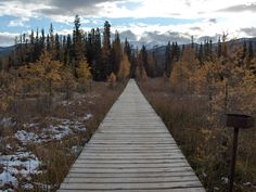 The boardwalk to Liard Hot Springs