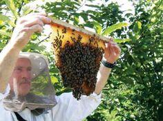 Top-bar beekeeping  TheTankFarm.org