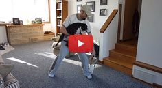 Funny Instructions to help Boston Terrier owners Catch their quick little dogs! Watch! ► http://www.bterrier.com/?p=11674
