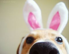 Easter means bunny time!