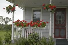 Hanging flower baskets - love the red geraniums - maybe three potted geraniums on the entry steps too!
