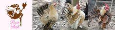 Pixie Chick pixi chickensblog