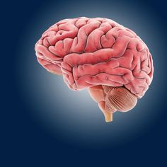 Time - Exercise Makes Kids' Brains More Efficient