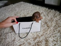 small puppy inside a channel bag