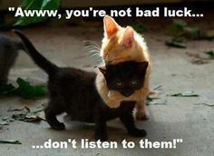 awww, anim, friends, funni, black cats, kittens, kitti, kitty, bad luck