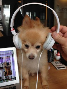 """I'm digging these jams…"""