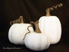pumpkins, pumpkins, & more pumpkins