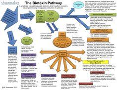 Shoemaker's Biotixin Pathway