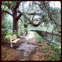 Savannah after the rain... #Savannah #NoBoysAllowed