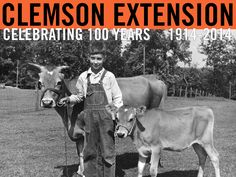Cover image for Extension Circular 449, Breeding Efficiency Standards for Dairy Cows and Heifers. October 1958. Image courtesy of Clemson University Special Collections. #ClemsonExt100
