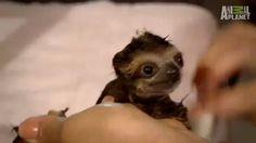 Bathtime for baby sloth! (gif)