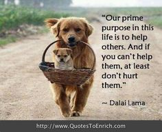 Our prime purpose in this life is to help others. And if you can't help them, at least don't hurt them. Dalai Lama.