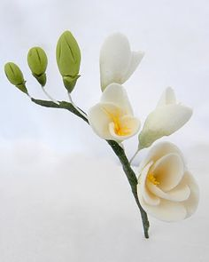 sugar flower freesia
