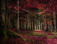 christians, christian wig, tree, amaz autumn, fall, photographi idea, natur, wigs