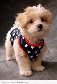 Star Puppie