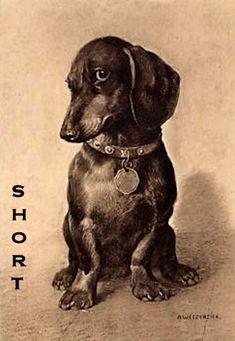 dachshund vintage art
