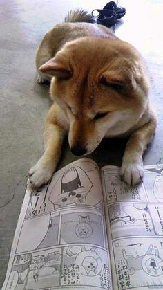 Shiba Inu !!!!!!