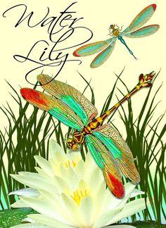 dragonfly digital image