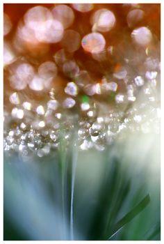Sparkling Droplets