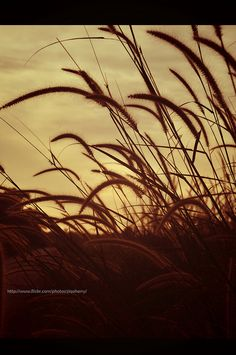 sepia photography by ziqa, via Flickr