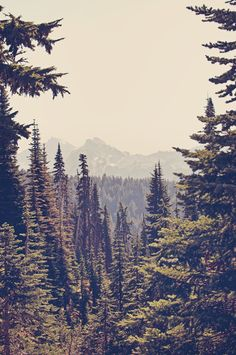 Mountains through the Trees Art Print