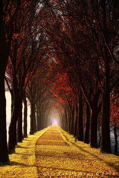 tree, color, autumn, fall, path