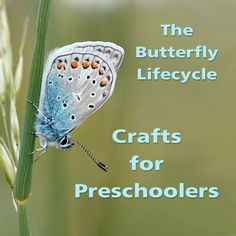 Part of a series of lesson plans and activities for preschoolers on the butterfly lifecycle - fun caterpillar and butterfly crafts!