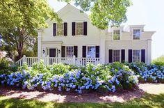yes!!! I want this many Hydrangea bushes!!