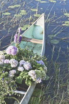 flowers in canoe.