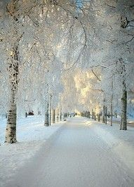 dream, winter wonderland, white christmas, place