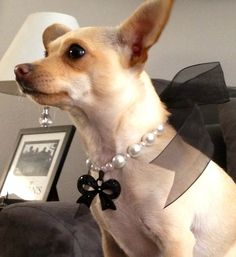 My Puppy Swag - Black Bow Charm dog necklace in White Pearl, $19.99 (http://www.mypuppyswag.com/black-bow-charm-dog-necklace-in-white-pearl/)