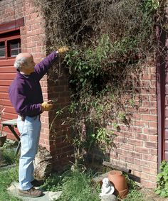 Pruning clematis - do you know which of the three types of clematis you're growing and how to prune them for the best results? I didn't. I'm so glad I pinned this!