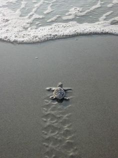 Sometimes we may feel like this little sea turtle, alone and overwhelmed with life and afraid. At times like that, remember that your family and friends are rooting for you and they believe in you.