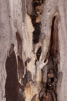 Tree Bark by kasia-aus, via Flickr