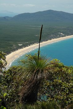 ♥ Hinchinbrook Island ~ Queensland in Australia