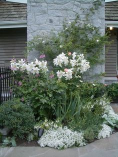 White and green grouping. plant, night garden, white gardens, garden ideas, white roses, night lights, bed, front doors, landscape designs