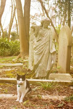 Highgate Cemetery Cat
