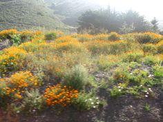 Along the PCH, California