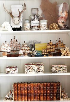 shells and ships on shelf