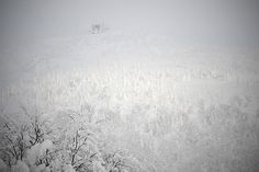 STILL LIFE: 2012 Snow Life in Hakkoda