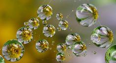dewdrops on spiderweb