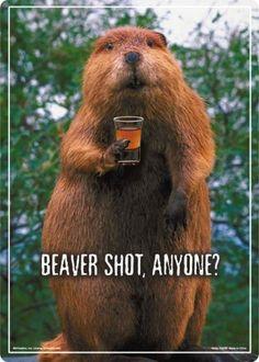 Beaver Shot Tin Sign at AllPosters.com