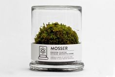Mosser: moss, Terrarium, filtered-water, Art, Botanical, Green Home decor